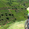 How Many Miles Should a Beginner Cyclist Ride